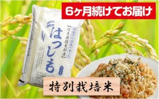 岐阜県でしか栽培されていない【幻のお米】!!