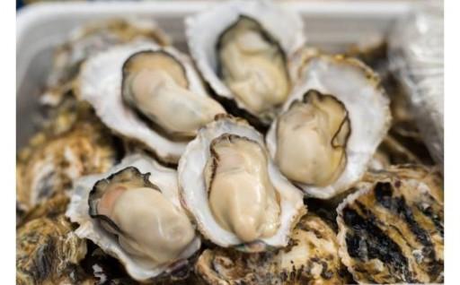 壱岐 内海湾産 殻つき生牡蠣