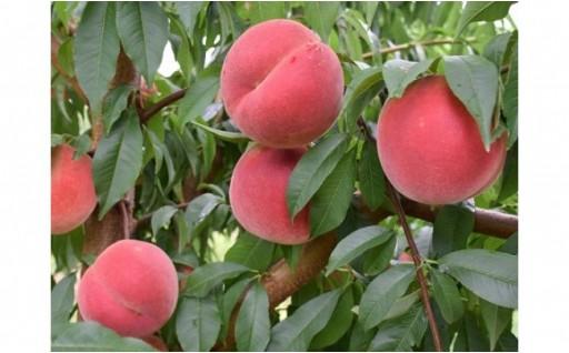 さくらんぼなど旬の果物が年4回も!