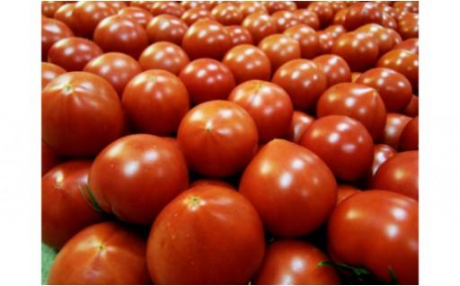 衝撃の糖度10度以上!フルーツトマト『みらい』