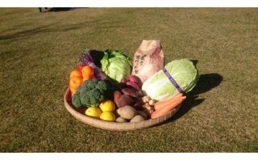 一年でこの時期だけの受付!幻の伝統野菜セットです