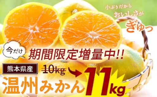 【期間限定増量中!】熊本県産 温州みかん11kg