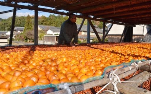 京都の縁起物「古老柿」 上品な甘み旨みが絶品