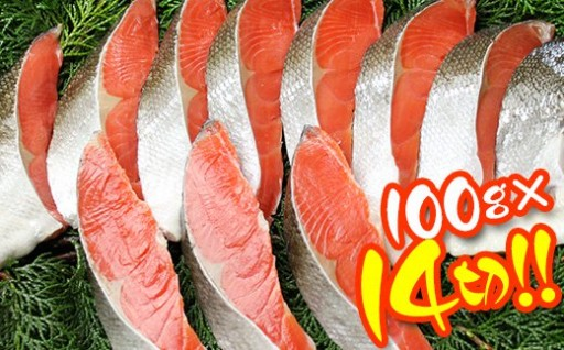 木更津市場直送!脂乗り抜群鮭切身約1.4kg!