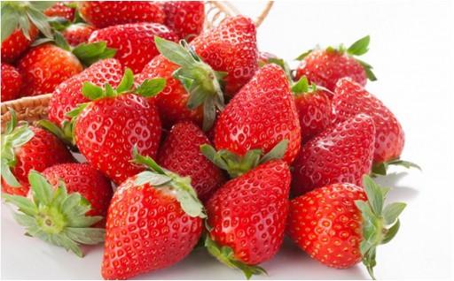フルーツの里いせはらより イチゴをお届け!