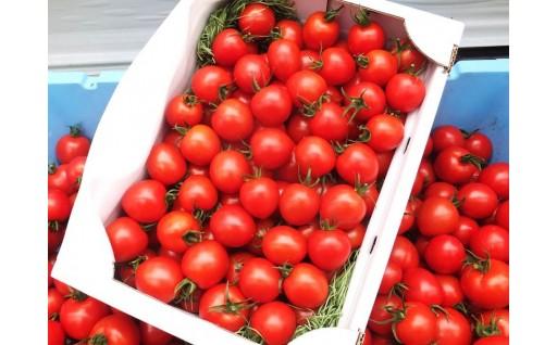 トマトの成分リコピンは抗酸化作用があるお手軽食材