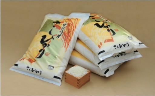 人気のお米登場!西尾産コシヒカリ20㎏