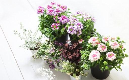 花のある生活で心豊かに。季節のお花セット