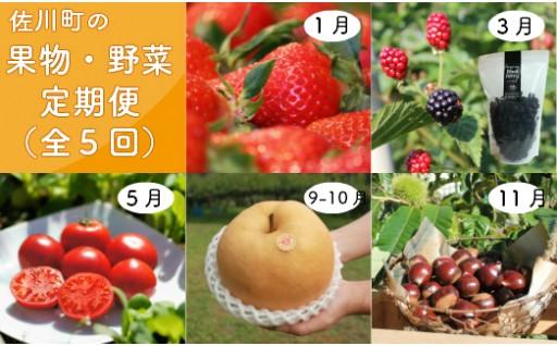 【大人気】さかわのフルーツを楽しむ定期便☆全5回