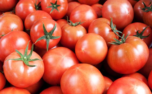 """""""日本一のトマト""""糖度8度以上のフルーツトマト"""