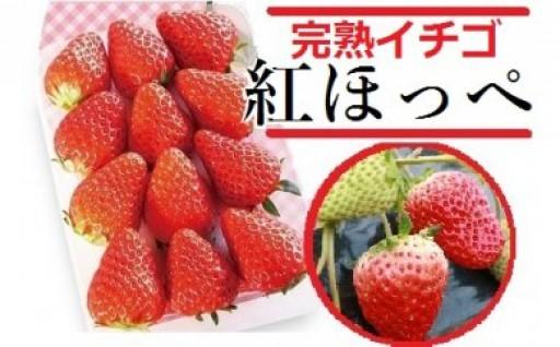 新春第1弾! 旬の味覚「いちご紅ほっぺ」4パック