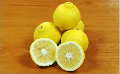 有明海の潮風で育まれた柑橘 はるか約4.5kg