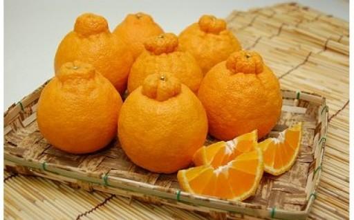 柑橘の本場!和歌山県有田市の「不知火」受付中!