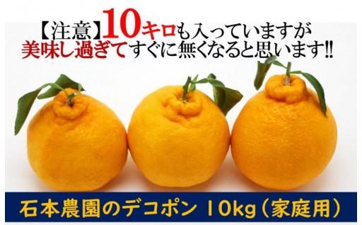 受付開始!石本農園のデコポン10kg(家庭用)