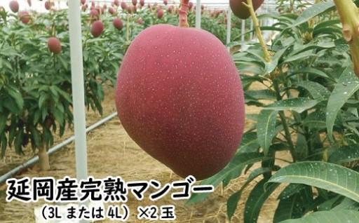 延岡産完熟マンゴー(2019年5月から発送開始)
