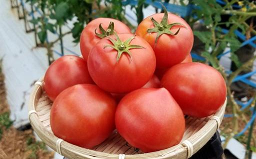 大人気!!糖度10度以上のはちべえ塩トマト