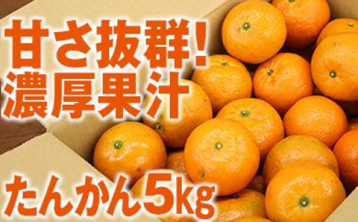 甘さ抜群!濃厚な果汁が大人気!たんかん5kg
