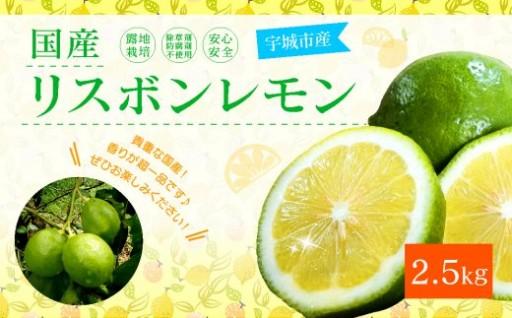 国産リスボンレモン 2.5kg レモン 柑橘