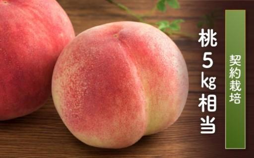 もぎたての桃をお届け!!【福島県玉川村】
