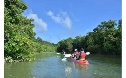 沖縄本島最大級マングローブ林をカヌーで自然探検!