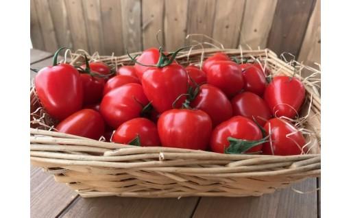 幻のトマト!トマト嫌いも食べられるトマトベリー