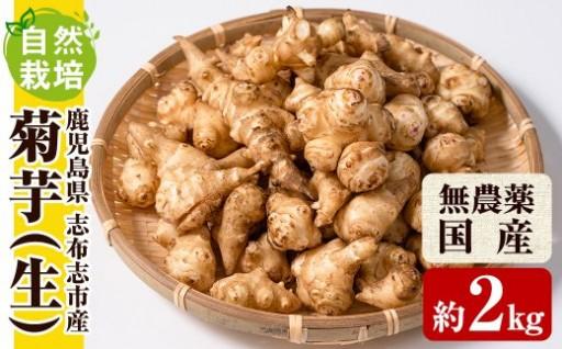 今話題の菊芋!無農薬で育った良質の菊芋。