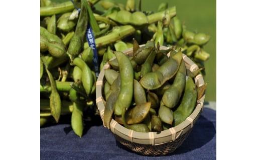 【大人気】丹波篠山黒枝豆が年中食べれるように!