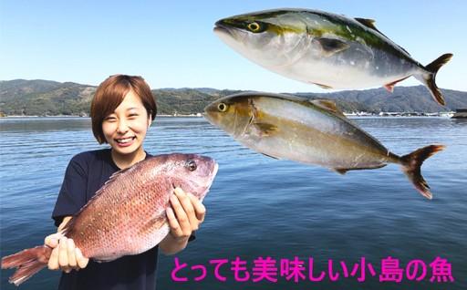 小島水産の安心・安全・とっても新鮮なお魚 年3回