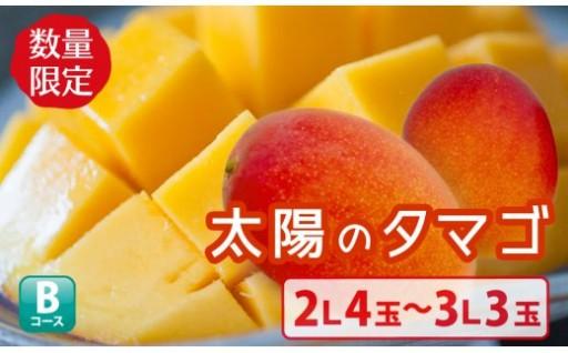 宮崎の最南端くしまのマンゴー【太陽のタマゴ】