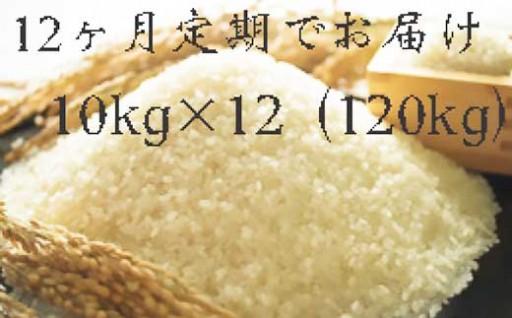 福岡県産ヒノヒカリ 10キロ×12回 定期コース