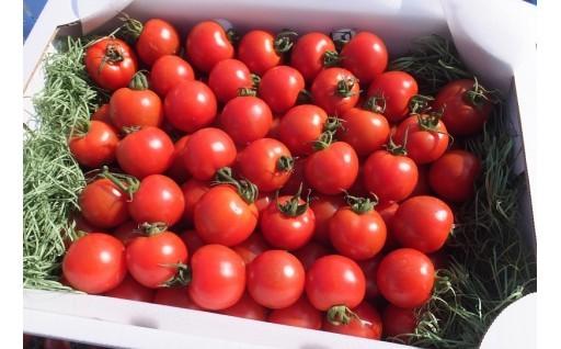 トマト好きの皆さま☆樹上で赤く色づいたトマト出荷