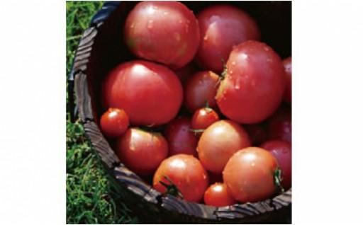 海洋深層水を使った果物のような「フルーツトマト」