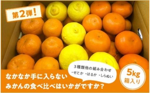 期間限定!レアな柑橘3種の詰め合わせ(5Kg)