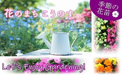 「花のまち こうのす」季節の花苗をお届けします!