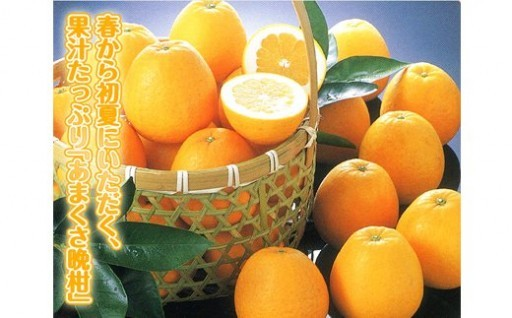 ジューシーオレンジ 7.5kg 河内晩柑