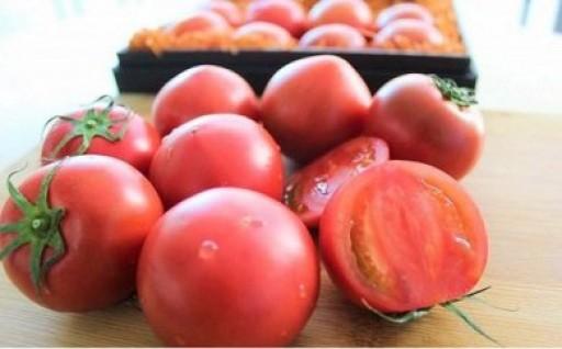数量限定 塩熟トマト600g(4月発送)
