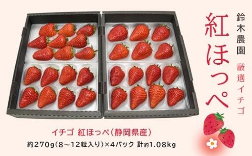 厳選イチゴ紅ほっぺ270g×4 鈴木農園