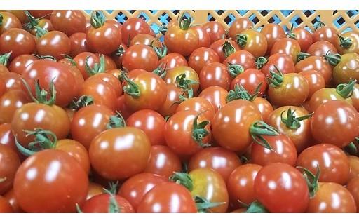 大人気の【はなまる農園】のミニトマト!追加!!