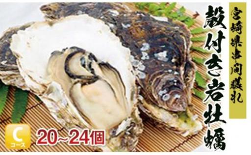 数量限定!濃厚な味わい【串間産殻付 岩牡蠣 】
