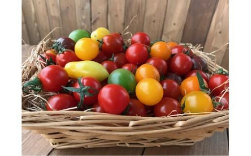 まるで宝石箱!色とりどり形さまざまなミニトマト♪