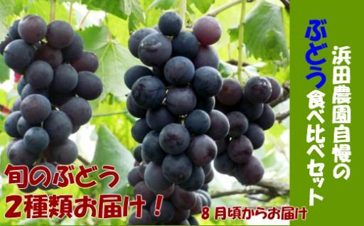 クラシックブドウ【2種セットでお届け】