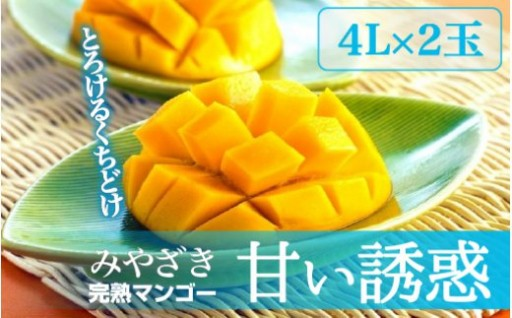 完熟マンゴー「甘い誘惑」4Lサイズ2玉