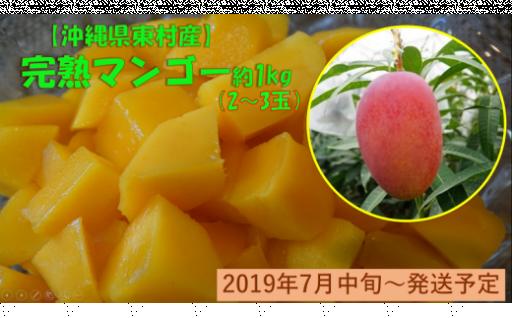 農家直送完熟マンゴー約1㎏【100セット限定!】