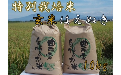 ファミリー農園吉永の【玄米】特栽はえぬき10kg