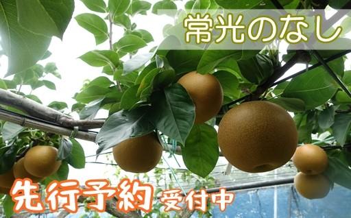 予約好評受付中!鴻巣産のおいしい梨「常光のなし」