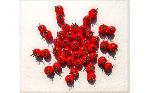 南国高知のおひさまトマト 1kg