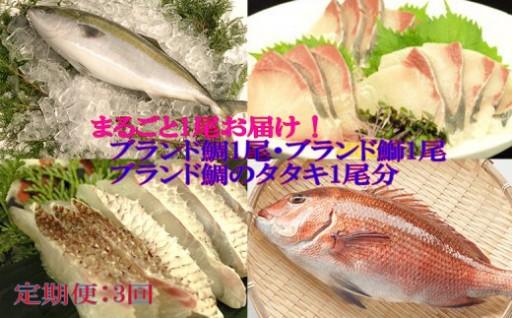 小島水産のとっても新鮮なお魚 年3回Aコース