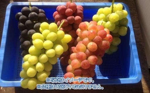 大人気中村葡萄園の先行予約を開始しました!
