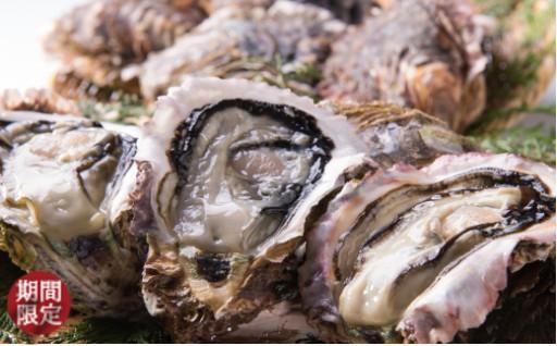 紀北の夏の牡蠣! 「岩牡蠣」絶賛受付中!