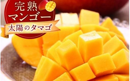 <数量限定>南国宮崎県産マンゴー「太陽のタマゴ」